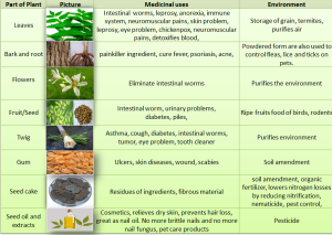 Chart of Neem plant parts