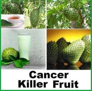 Graviola fruit controls cancer