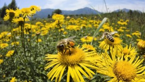 photo-of-bees-and-flowers-to-use