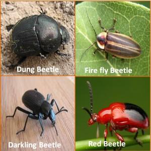4 beetles