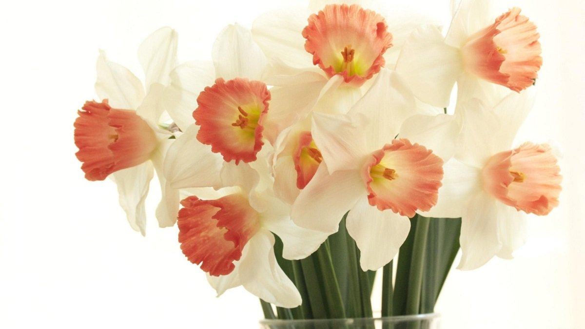 Celebrate Your Birthday With Daffodils In Marchhealthohappiness