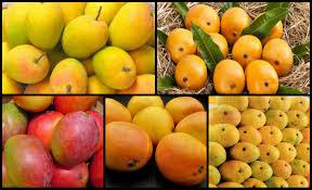 kinds of mangoes