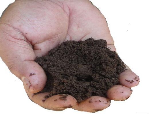 vermicompost-dimla-jpg