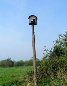Screech owl box for inviting owls